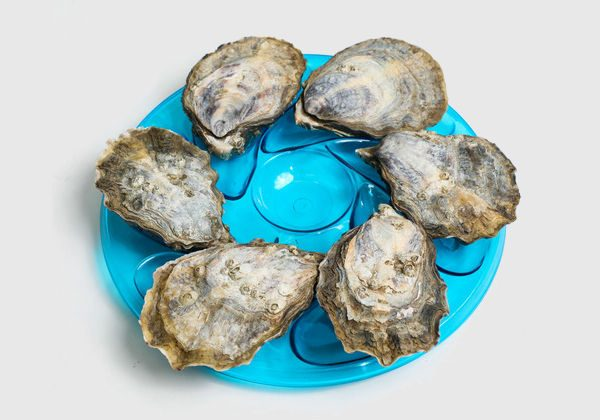 Oyster Plates for six oysters