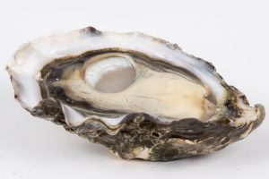 Did you know oysters are hermaphrodites, that there are only 5 types of oyster in the world or that they can clean 50 litres of water a day?
