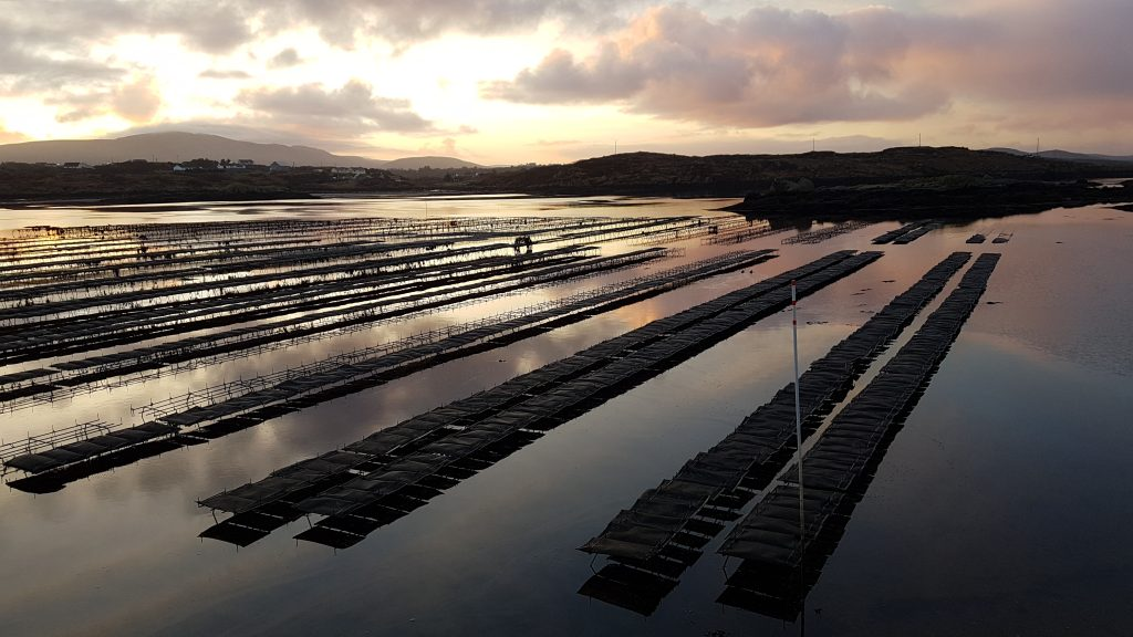 Sustainable oyster growing