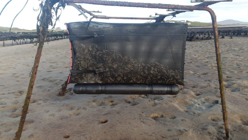 Using a flotation system when growing oysters guarantees better meat quality and oyster shape, and means less hours stood at the trestles for you!